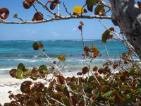 Quelques paysages côtiers avec les trois Ilets dans la baie de Fort de France, l'anse d'Arlet plus au sud, le rocher du Diamant, la Pointe Macré où l'on retrouve l'océan Atlantique, un mouillage dans la presqu'île de la Caravelle, le petit port du Marigot, Grand Rivière tout au nord et l'on redescend sur Saint Pierre au bord de la mer des Caraïbes.