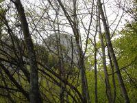 La silhouette de la Dent du Chat se dessine derrière les branchages. Plus bas, les lacs de Chevelu dans l'avant-pays. Les passages difficiles sont sécurisés par des échelles et des cables. En haut, une vue sur le Mollard Noir et l'accueil que nous réservent des primevères à oreille d'ours.