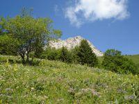 Les prairies en fleurs amènent en douceur au col de la Cochette avant d'entamer l'arête finale.