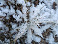 Fleurs de givre et trace dans la neige.