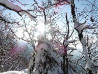 A travers les arbres enneigés on peut apercevoir la Belle Etoile.