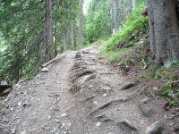 Une vue sur le Merdassier et l'Etale au départ et un sentier qui s'enfonce dans la forêt jusqu'au chalet de Crevetout.