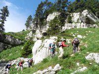 Vers le plateau de l'Alpe, de grands yeux observent les randonneurs.