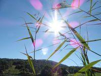 Dans la prairie vers la Thuile. Le lac et le village sous le pic de la Sauge. Jeux de lumière dans la roselière.