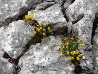 Sur le flanc est, un a-pic impressionnant. Au sud, sur la crête, un sommet très découpé avec un arbre isolé. Des fleurs au creux du rocher.