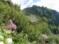 On progresse à travers une végétation humide. Le Mont Bellachat. Une traversée de torrent.