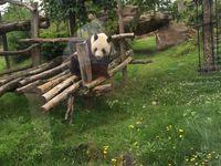 Adèle au ZooParc de Beauval...