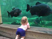 Vivarium et Aquarium...