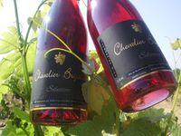 Comprendre l'élaboration du rosé de saignée