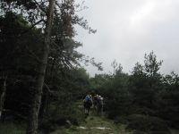 traversée d'une belle forêt d'Aubrac, (un peu défoncée pour le déboisement !), quelques passages de clôtures bien aménagés, des champs de fleurs d'Aubrac, ....