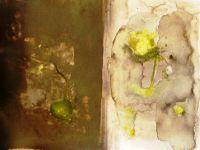 info stage de peinture 3 au 6 mars 2014