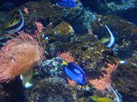 Le plus bel aquarium de ma vie