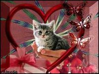 IL N'Y A PAS D'AMOUR....IL N'Y A QUE DES PREUVES D'AMOUR.....