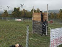 [Manifestation] Épreuve de &quot&#x3B;Ring&quot&#x3B; avec le Club Canin du Sud-Aveyron