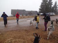 à la sortie de l'auberge nous sommes étrangement assailli par un troupeau de chèvres pacifiques