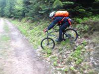 les ptits nouveaux en action&#x3B; du sous bois sous une atmosphère humide et fraîche pour cette journée