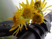 pas de sieste après le repas pour une fois :). A défaut de la vue, nous profitons des petites fleurs qui parsèment notre environnement.