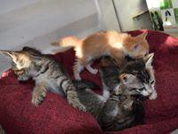 4 chatons au pied des poubelles NOLIVIER STE ROSE