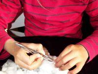 Le cotonnier : de la graine au tissu