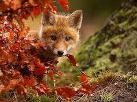 Petit Haïku d'automne