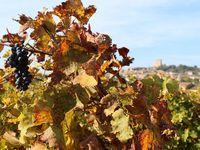 ...dans les vignes de Chateau Neuf du Pape....