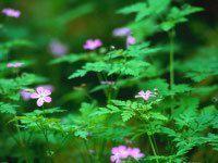 Images du jour : Floralies