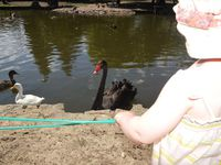 Notre balade au Parc Ornithologique de Bretagne à Bruz