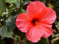 Okinawa : L'île de Takétomi 竹富島, un petit paradis japonais !