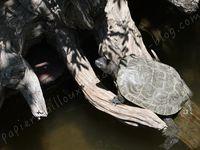 Le village des tortues