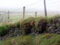 brume et paysage irlandais