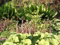 le Royal Botanic Garden d'Edimbourgh …
