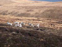 du Cairn Gorm à Inverness ...