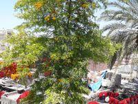 Les souks (notamment du côté des teinturiers) et la place Jamâa-El-Fna