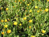 Qui peut me dire quelle est la  variété de  cette plante à fleurs ? Merci !