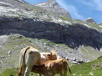 Col de Boucharo - Gavarnie (Pyrénées)