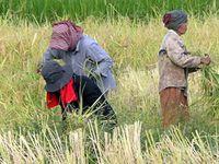 L'AGRICULTURE AU CAMBODGE