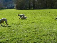 Venez nous retrouver le 15/5 pour une  promenade et pique-nique en Pays de loire dans les Alpes Mancelles