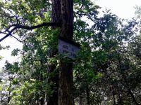 Fontainebleau et sa forêt !