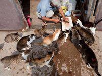 Aoshima ou l'île aux chats au Japon