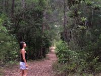 Lost in the wood... ���