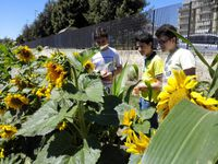 04-A2 Créer et entretenir un  jardin Erasmus