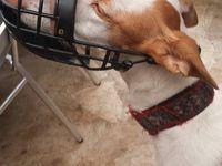 muselière pour chien de chasse