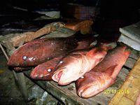 Le marché aux poissons à l'arrivée des pêcheurs de M'bour est un vrai spectacle. Une foule nombreuse de vendeurs et de petits acheteurs se pressent autour des pirogues tirées par les chevaux. Nous acheterons un barracouda, faute de congre, pour faire une soupe de poisson. De grosses carpes rouges et autres poissons divers sont après l'achat écaillés par des jeunes filles sur la plage. Chacun sur le marché a son occupation, du vendeur de sacs plastique, de l'écailleur, aux petits revendeurs qui proposent quelques poissons sur un plateau et d'autres qui les transportent dans des bacs pour les camions frigo.
