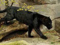 Sortie : Le zoo de Vincenne