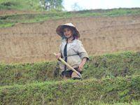 Trek chez les Hmong à Sapa