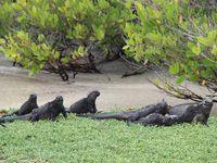 A la découverte des Galápagos