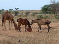 La vie à Afrika Mandela Ranch