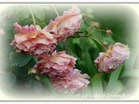 Cuando llegué, a finales de junio, aún quedaban rosas para disfrutar
