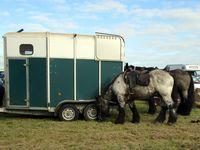 """Un poney amateur de gâteaux&#x3B; deux """"Brabançons""""&#x3B; des produits locaux pour le ravitaillement&#x3B; devant la Possonnière&#x3B; Obélix, l'âne randonneur"""