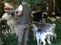 Ses chèvres évoluent dans un cadre superbe qui leur offre tout ce dont elles ont besoin.